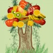 Stock Photo: Tree from fruit