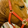 Red bridle — Stock Photo #1983525