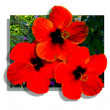 Stock Photo: Poster red flowers