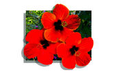 Poster red flowers — Stock Photo