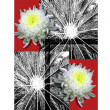 Chrysanthemums for a poster — Stock Photo
