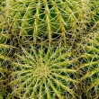 Prickly balls — Stock Photo