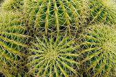 Prickly balls — Stock Photo
