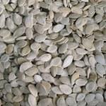 Pumpkin Seeds — Stock Photo #1079392