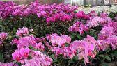 Orchid Nursery — Stock Photo