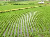 Rice Paddies in Japan — Stock Photo