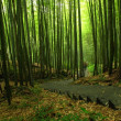 Green Bamboo Forest — Stock Photo #1147168
