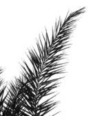 Palm Branch — Stock Photo