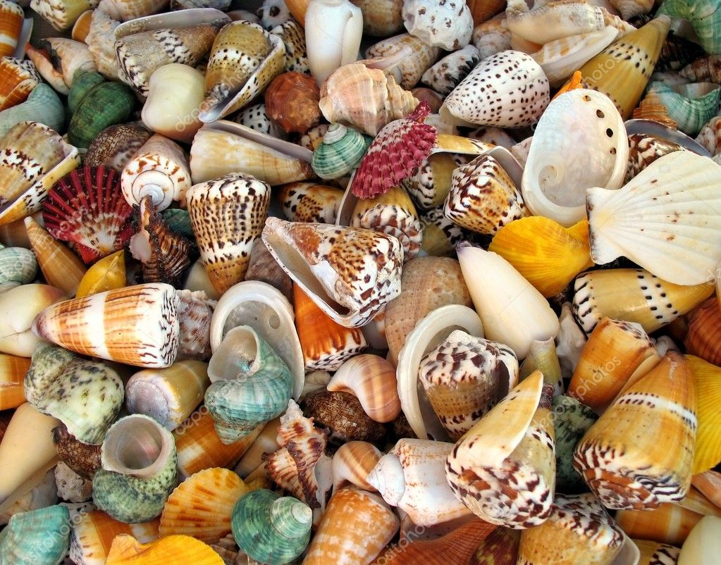 -- an assortment of exotic shells makes a nice background — Stock Photo #1146791