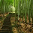 Green Bamboo Forest — Stock Photo #1213547