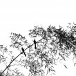 Bamboo Tree with Two Birds — Foto de Stock