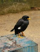 Bird For Sale — Stock Photo