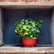Flower Pot in a Window — Stock Photo