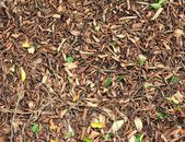 Dry Leaves — Stock Photo