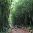 Stock Photo: Bamboo Road