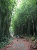 Bamboo Road — Stock Photo