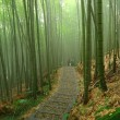 Romantic Bamboo Forest — Stock Photo