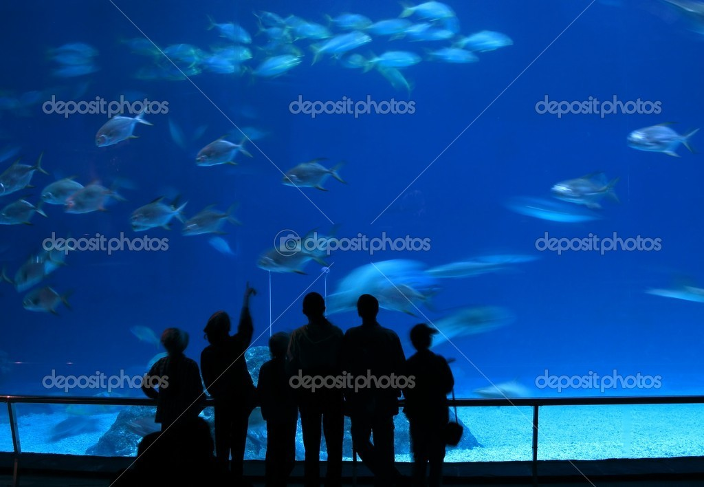 -- admiring the marine life in a huge tank — Stock Photo #2190505