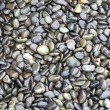 Shiny Wet Pebbles — Stock Photo