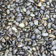 Shiny Wet Pebbles - Stock Photo