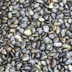 Shiny Wet Pebbles — Stock Photo
