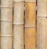 Straight Bamboo Poles — Stock Photo