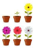 Flower Pot — Stock Vector