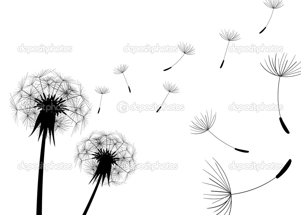 Blowing dandelion black and white - photo#26