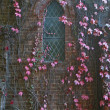 Vines on church wall - Stock Photo