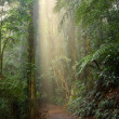 Rain forest light - Stock Photo