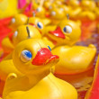 Yellow duck — Stock Photo