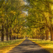 Dreamy autumn road — Stock Photo