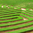 Royalty-Free Stock Photo: Grass maze