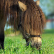 Horse eating grass — Stock Photo #1197579