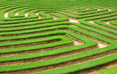 Grass maze — Stock Photo