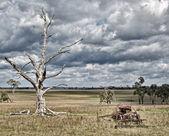 Burza idzie na farmie — Zdjęcie stockowe