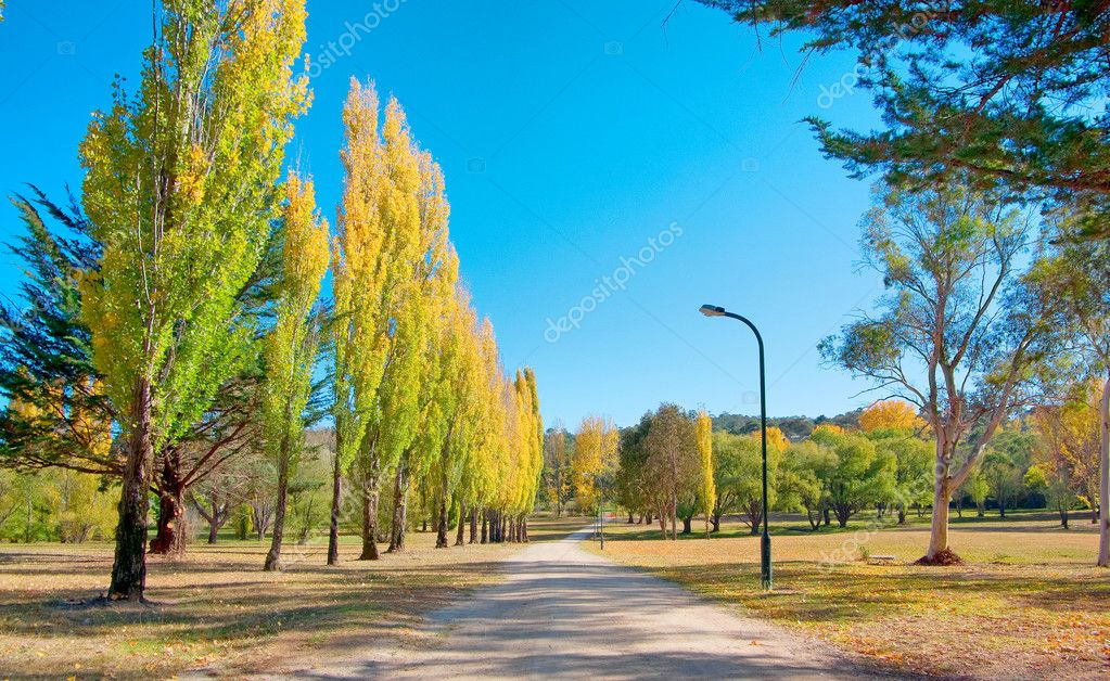 Great image of a path through the park  Stock Photo #1197529