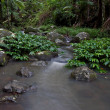 Royalty-Free Stock Photo: Rainforest stream