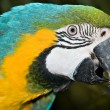 Macaw — Stock Photo #1212902