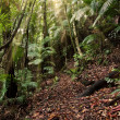 Rainforest path - Stock Photo