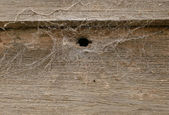 Great rough old wood background texture — Stock Photo