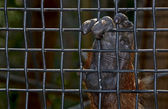 an orangutan hand holds on to the wire mesh — Stock Photo