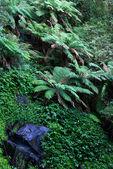 тропические леса — Стоковое фото