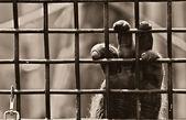 Captive — Stock Photo