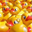Rubber ducky you are the one — Stock Photo #1430299