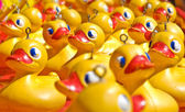 Rubber ducky you are the one — Stock Photo