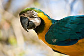 Macaw looking back — Stock Photo