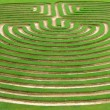 Garden maze — Stock Photo