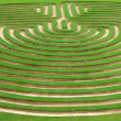 Garden maze — Stock Photo #1800154
