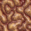 Brains — Stock Photo #1832814